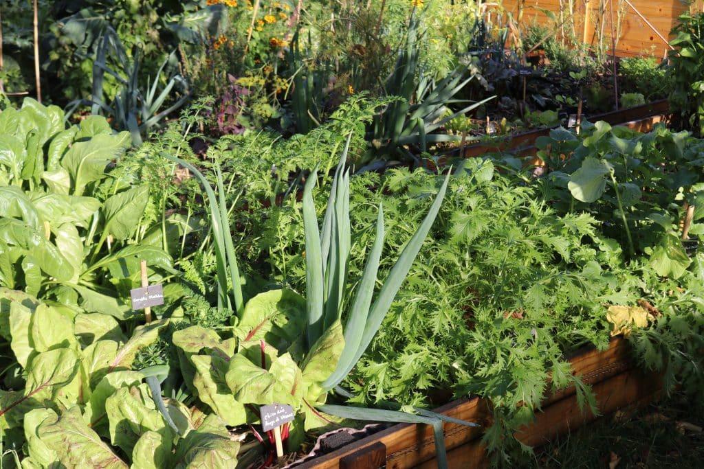 Conseils et cr ation de jardins potagers en permaculture for Formation conception de jardin