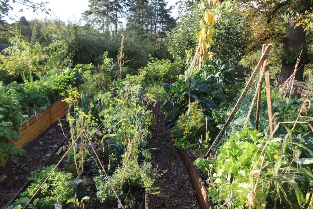Cr ation de jardins potagers comestibles nourriciers en permaculture for Culture des jardins