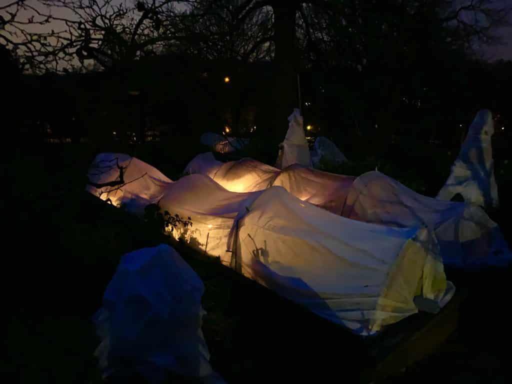 tunnel d'hivernage chauffés par des pots en terre cuite et de l'huile végétale, vue de nuit avec lumière